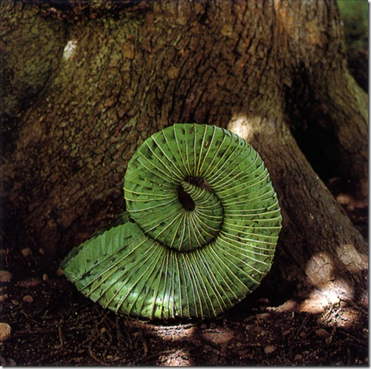 Favori Andy Goldsworthy, l'harmonie entre art et nature UR66